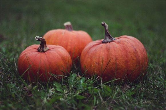 Three pumpkins sitting in the grass